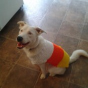 wearing a candy corn colored sweater