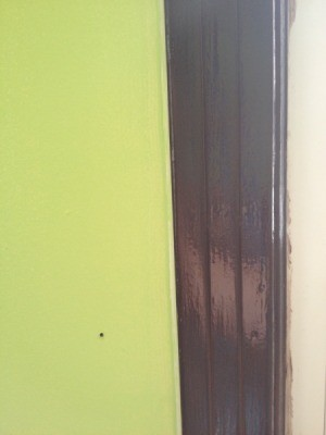 wall and trim