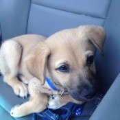 puppy curled up on car seat