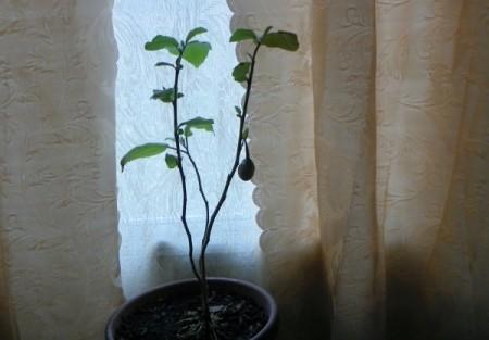 tall, leggy plant