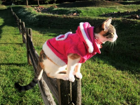 cat in a red jacket