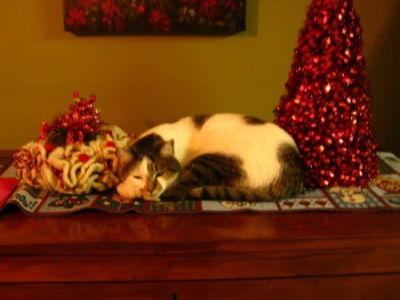 tabby cat lying next to red Christmas tree decoration