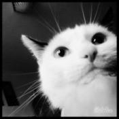 black and white photo of Lola