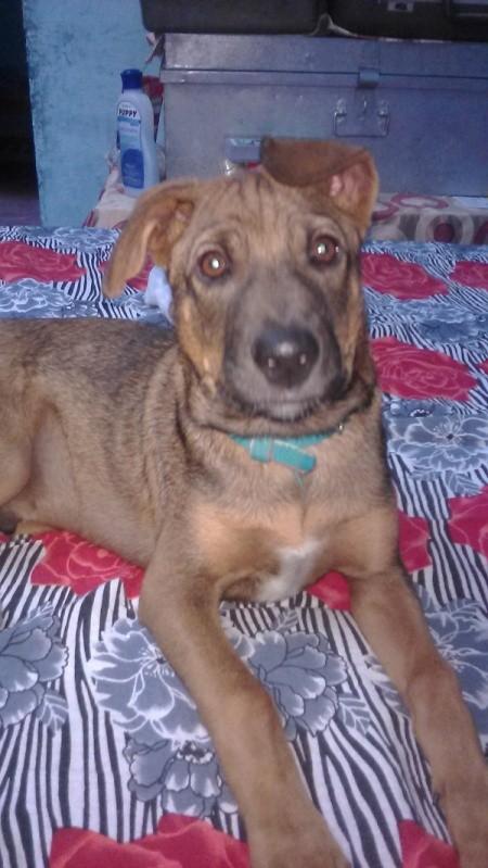 light brown dog
