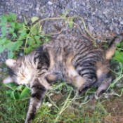 rolling in the wild catnip