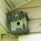 nest on top of a birdhouse