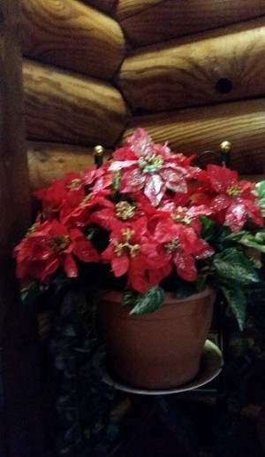 A philodendron with artificial poinsettias