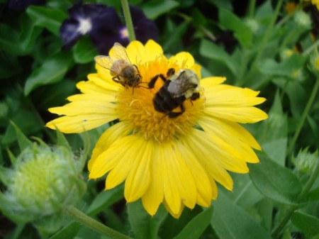 Busyness of Nature (Pollination)