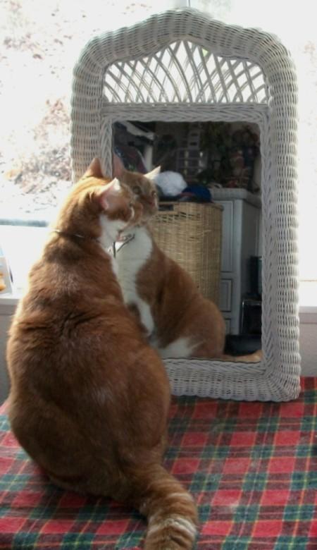 admiring himself in a mirror