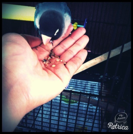 bird eating out of someone's hand