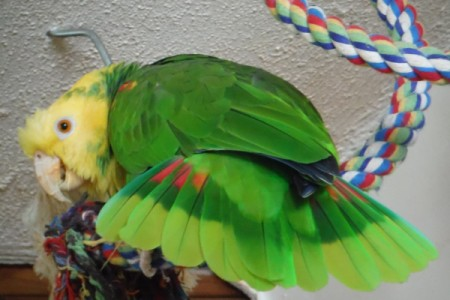 parrot with wings spread