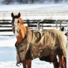 Winter Horse Care Tips  - horse wearing a blanket in corral in winter
