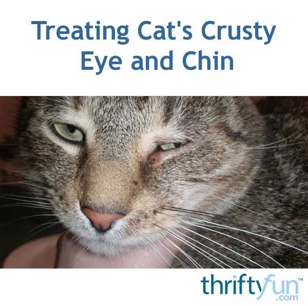 treating cat 39 s crusty eye and chin thriftyfun. Black Bedroom Furniture Sets. Home Design Ideas