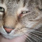 closeup of cat's eye