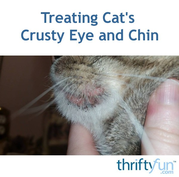 Black Eye Crust Cat