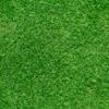 Bermudagrass