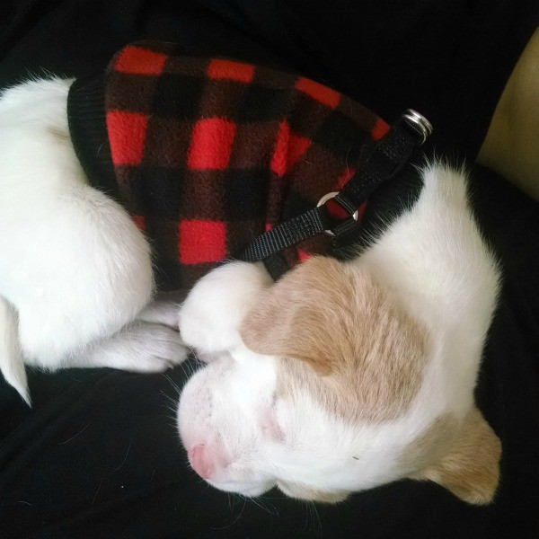 sleeping in his red and black plaid coat
