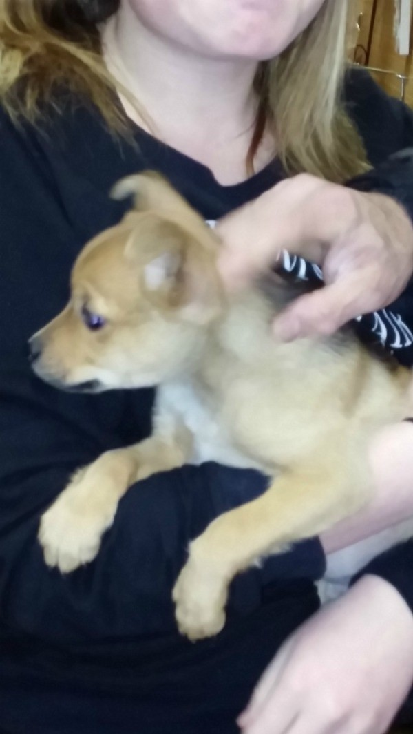 petting a yellow puppy