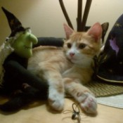 kitten with witch and hat