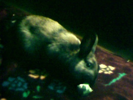 rabbit, very dark photo
