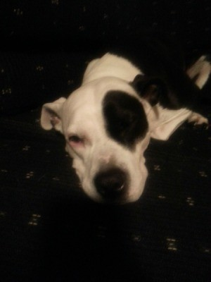 white with black pitty