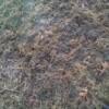 brown lawn