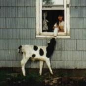 Spot (Holstein Cow)