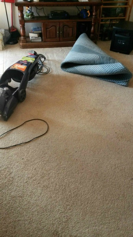 Homemade Carpet Shampoo That Works