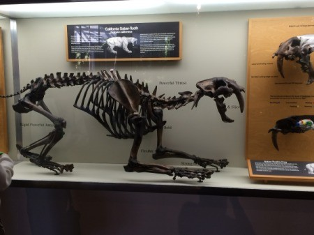 animal bones 2