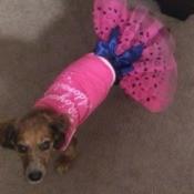 dog in pink tutu
