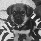black and white closeup photo of puppy