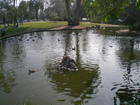 Turtles at Turtle Park in California