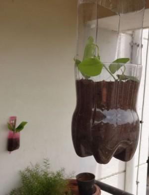 A hanging bottle planter
