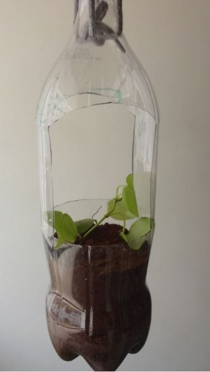 A hanging bottle planter