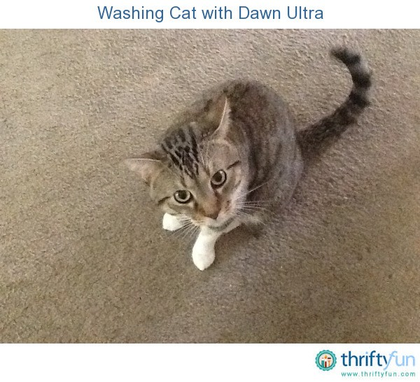 Can You Wash Your Cat With Dawn Dish Soap