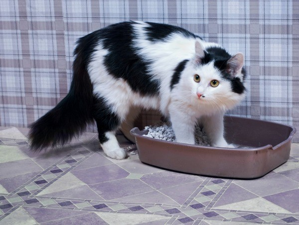 Cat poops right next to litter box