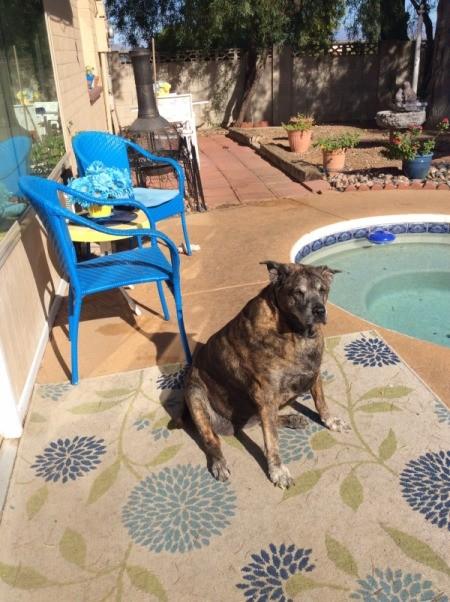 dog sitting next to pool