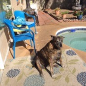 dog sitting next to pool