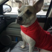 in car wearing her red sweater