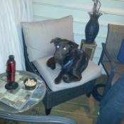 black dog lying on chair