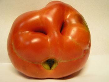 Tomato Face