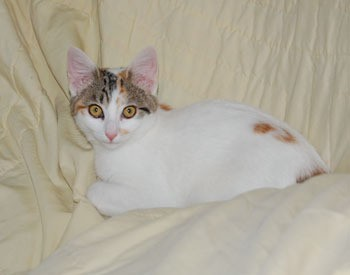 Sissy Cat