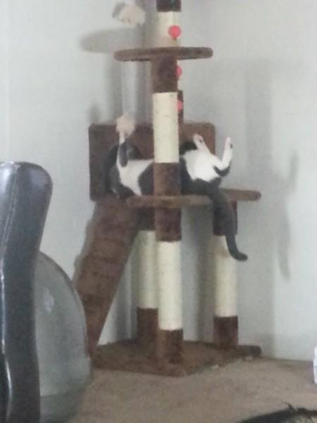 Princesa (Cat)