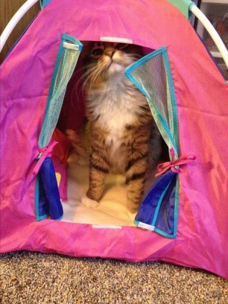Kitty (Tabby Barn Cat)