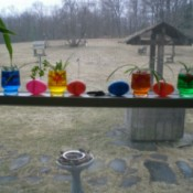 colored water with plants
