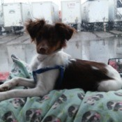 dog in car on blanket