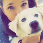 white dog with blue eyes