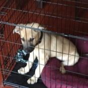 puppy in wire kennel