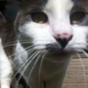 very closeup of a cat's face
