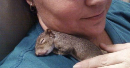 Flip (Grey Squirrel)